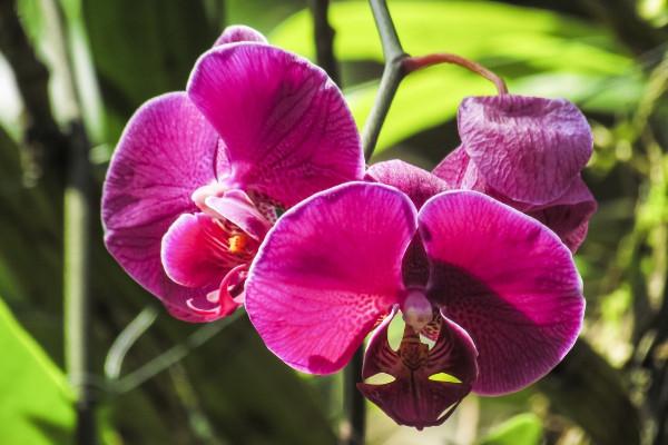 蘭花種子如何發芽