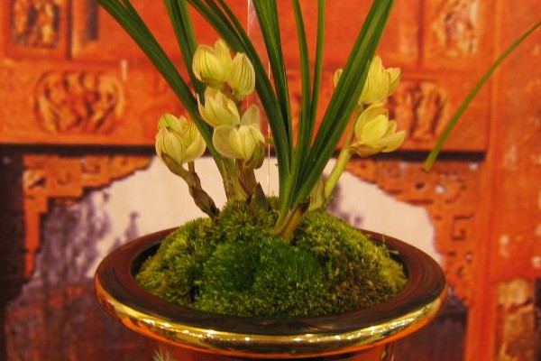如何养兰花,浇水保证盆土湿润光线用散射光滋养