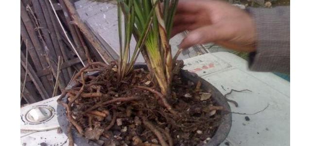 兰花的品种,细数兰花十大最珍贵的品种