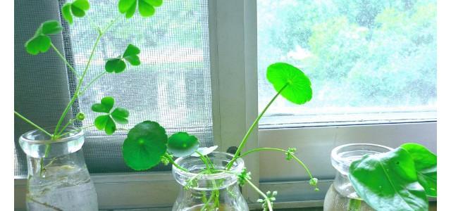 水浇绿萝妙招,保证见干见湿的浇水原则